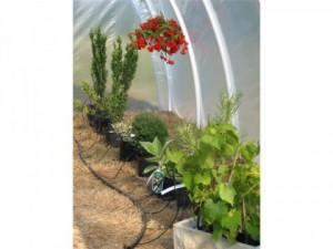system kropelkowy do nawadniania roślin